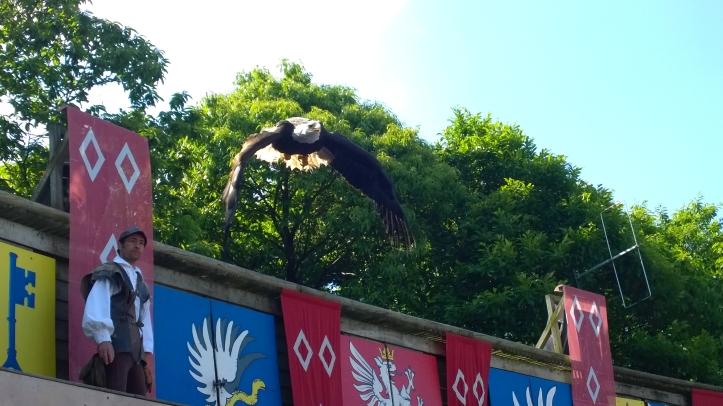 Le puy du fou 2014 le bal des oiseaux aigle royal