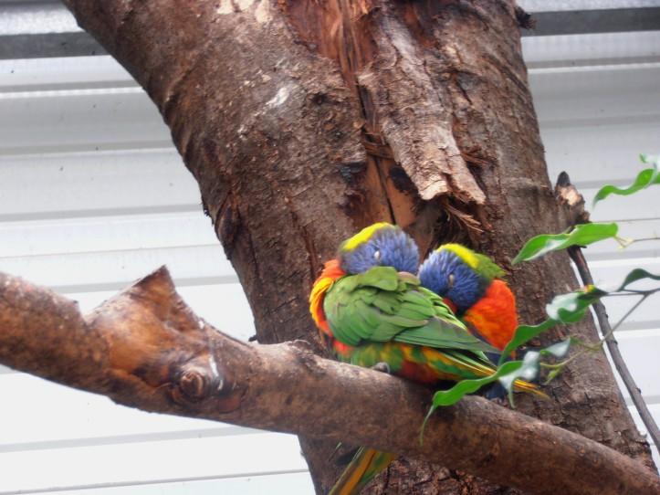 Biotropica juin 2014 petits oiseaux colorés