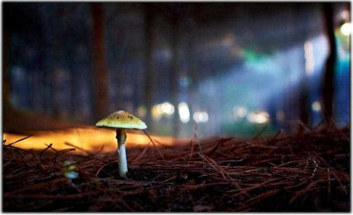 tumblr mushroom