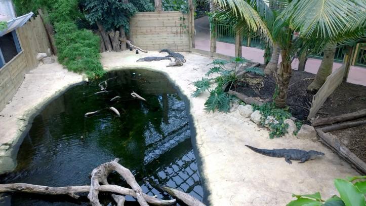 Biotropica juin 2014 gros crocodiles
